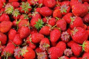 Strawberry picking in Victoria