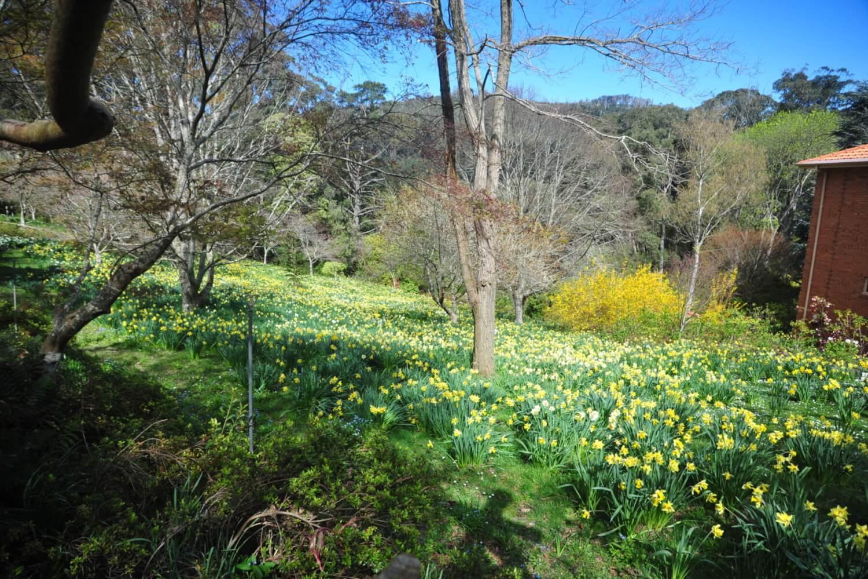 Forest Glade Gardens, Mount Macedon